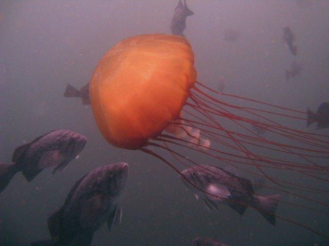 Diving in Seaside, United States - By Luis Felipe