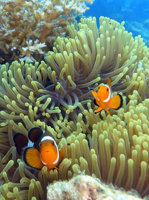 Diving in Kampong Tanjong Demong, Malaysia - By Jose R. Macias