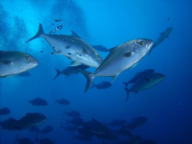 Diving in Puerto del Carmen, Spain - By Melissa